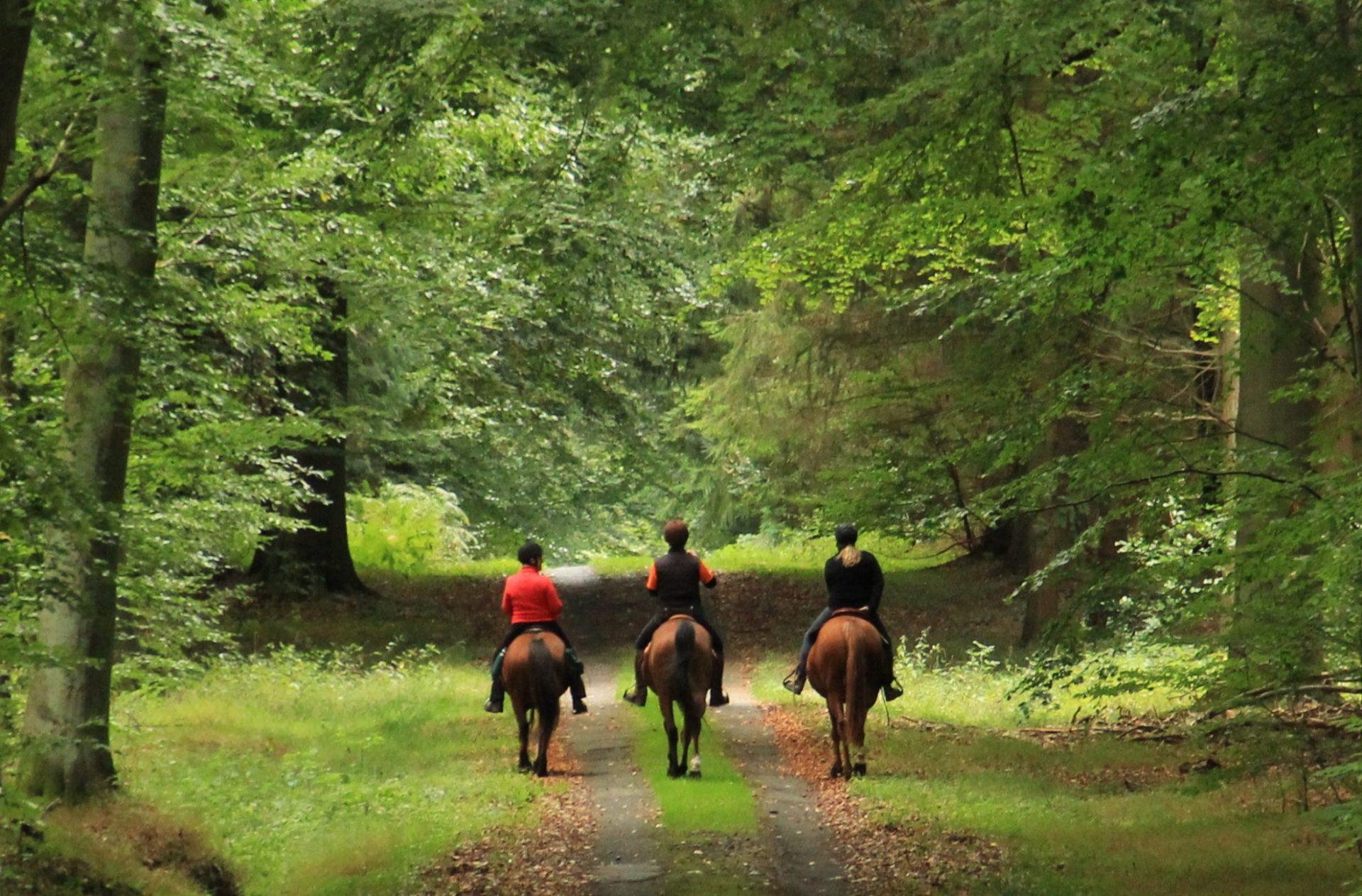 Hesteturisme rummer et stort potentiale, mener en række danske hesteentusiaster. (Foto: Ferierytter)