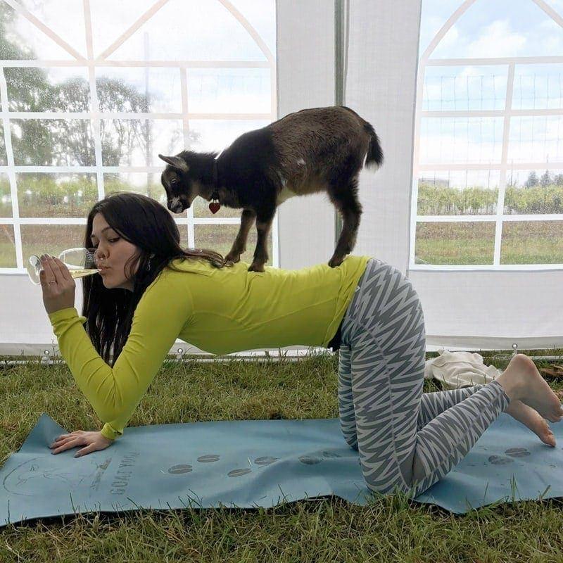 Den perfekte kombi? Gede yoga og vinsmagning må være det bedste af to verdenen, og det kan du opleve i Oregons Willamette Valley. (Foto: Travel Oregon/Sachiey Yorck)