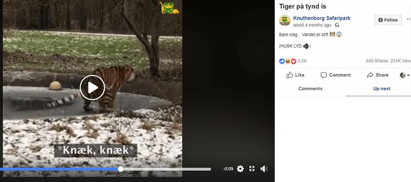 Video tiger  Sociale Medier, Miriam Hindsgaul, Knuthenborg Safaripark, Instagram, Facebook Succes på SoMe? Så spørg dig selv om det er 'bacon' ... tema-saadan-faar-vi-succes-paa-de-sociale-medier Video-tiger