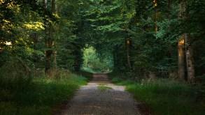 En ny app viser vej til oplevelser i naturen i Ringkøbing-Skjern Kommune. (Foto:Can Aslan/Unsplash)