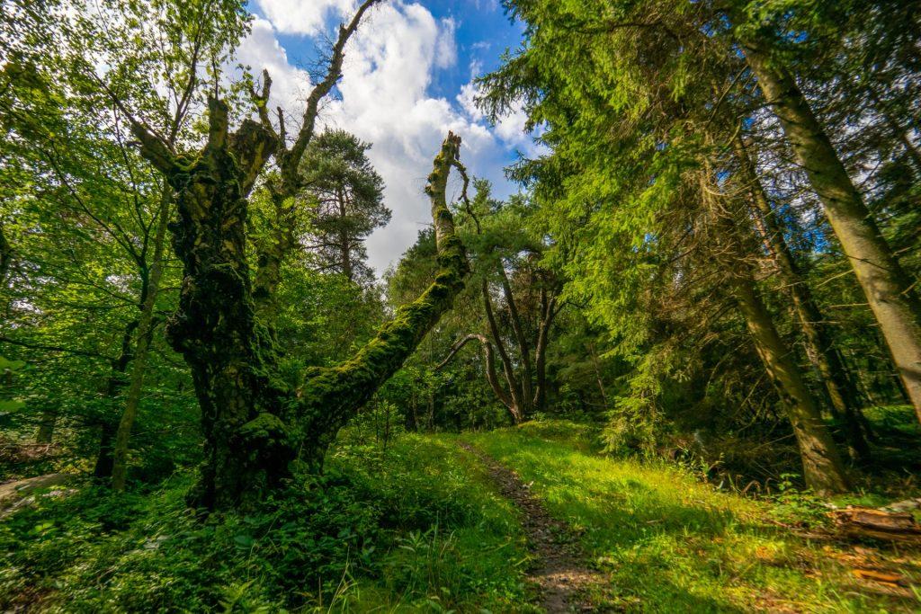 Paradisbakkerne på Bornholm. Med midler fra regeringens Sommer i Naturen 2020 får Bornholm nu en vandrerute på tværs af øen, der får navnet Højlyngstien. Markeringen af stien færdiggøres i sensommeren og hele stiforløbet vil kunne gås fra 1. september 2020. Dermed kan stien også nå at understøtte vandreturismen i årets efterårssæson. (Foto: Destination Bornholm/Martin Birk)