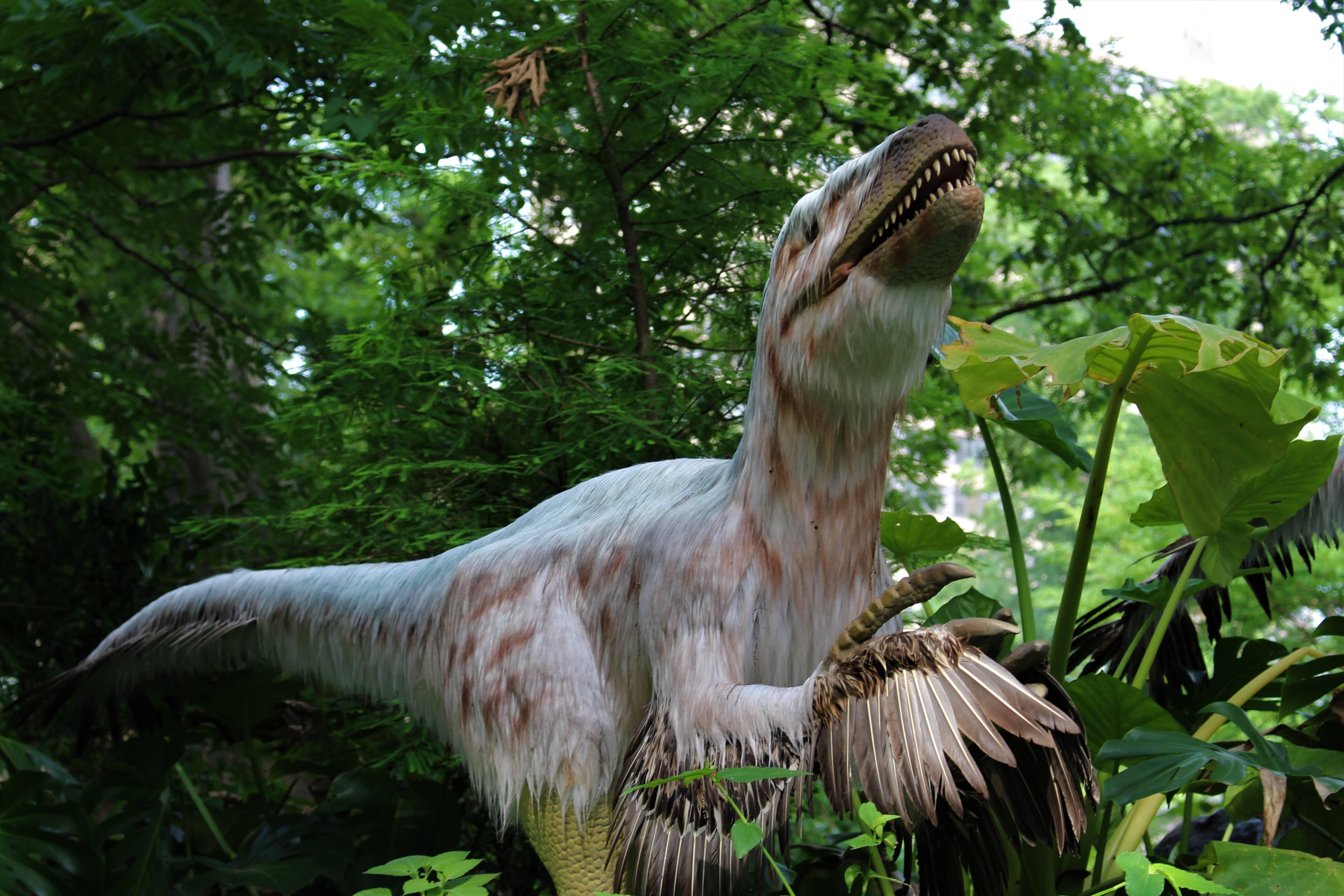 Dinosaur flytter ind i Københavns Zoo. (Foto: DIno Don)