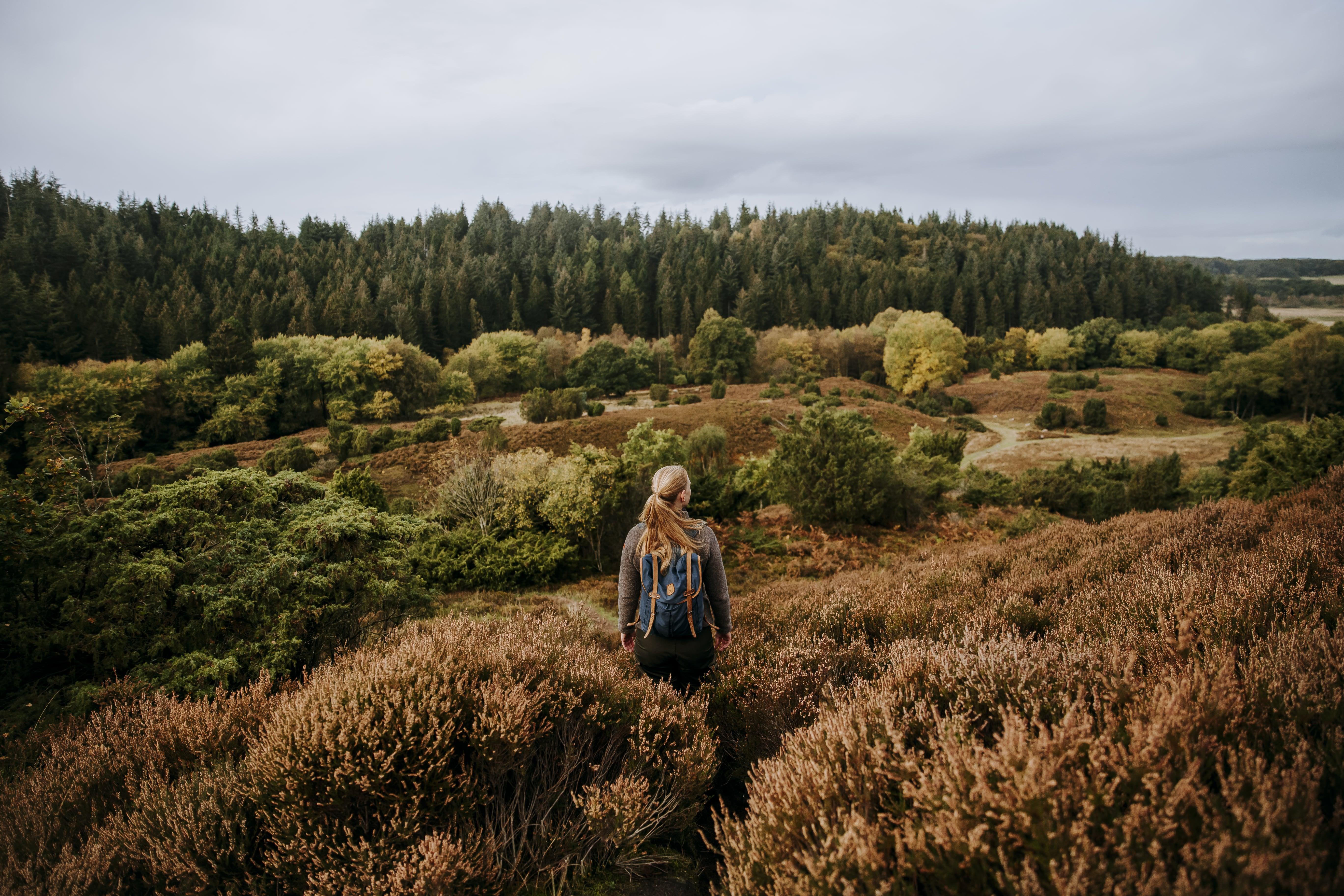Rebild Bakker og Rold Skov danner rammen om Vandringsweekend i oktober. (Foto: Rebild Porten)