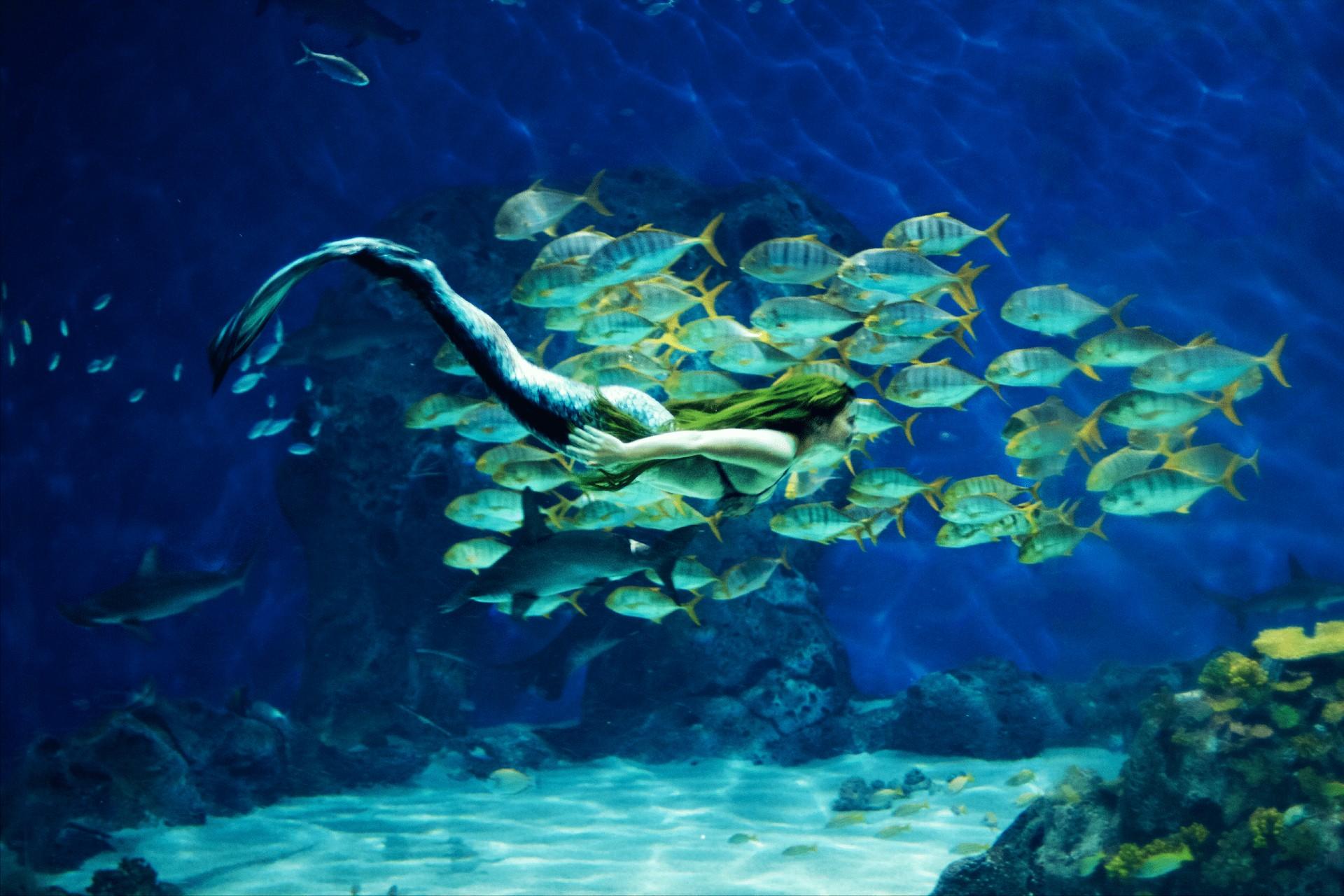 Havfruer i akvariet på Den Blå Planet